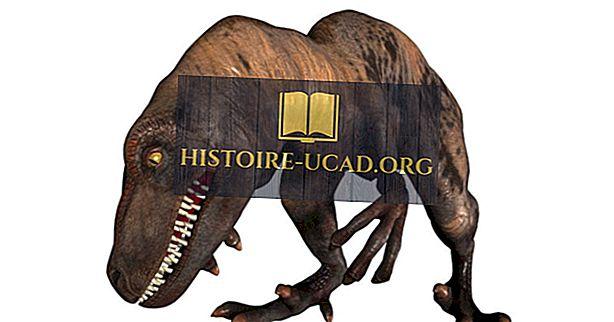 Γεγονότα Velociraptor: Εξαφανισμένα ζώα του κόσμου