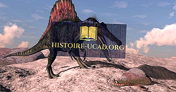 Fakty spinosaurus: vyhynuté zvieratá sveta