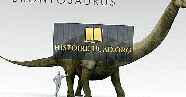 vidste du - Brontosaurus Fakta: Uddøde Dyr af Verden