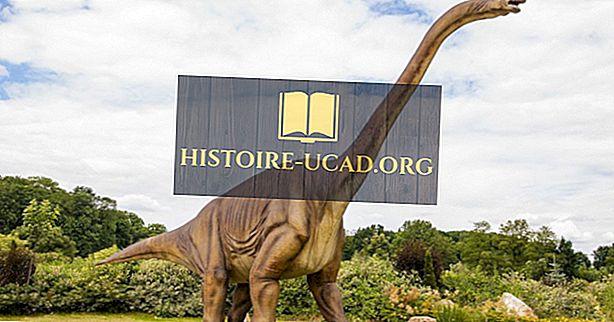 Faits de Diplodocus: Animaux du monde disparus