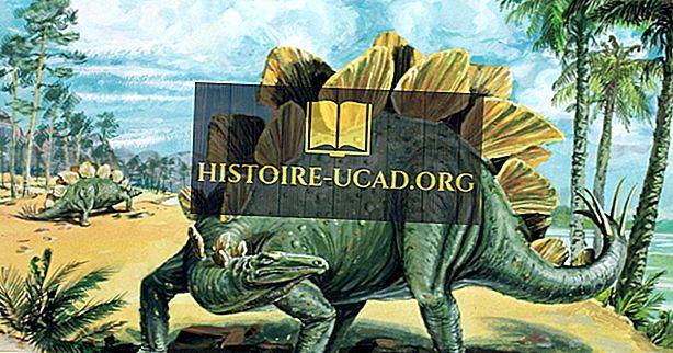 Stegosaurus Fakta: Uddøde Dyr af Verden