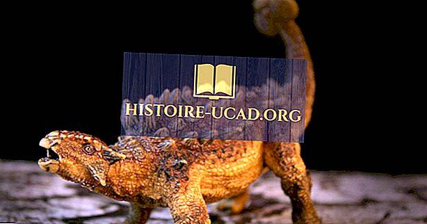 vidste du - Ankylosaurus Fakta: Uddøde Dyr af Verden