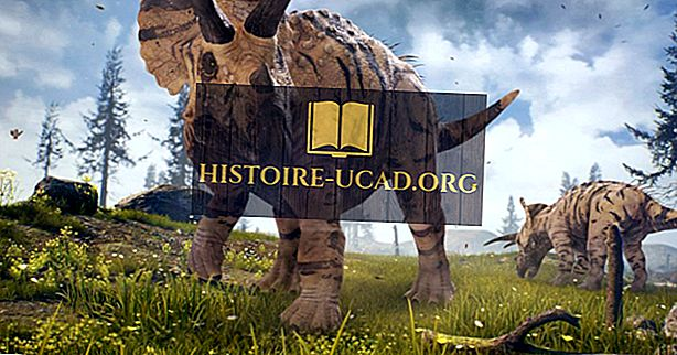 Le saviez-vous - Triceratops Facts: Animaux disparus du monde