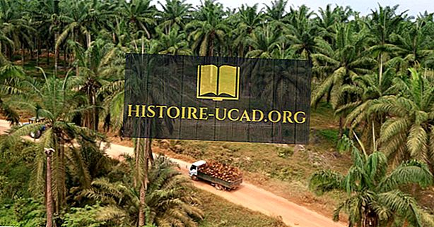 Waar zijn de Palmolieplantages van Indonesië gelegen?