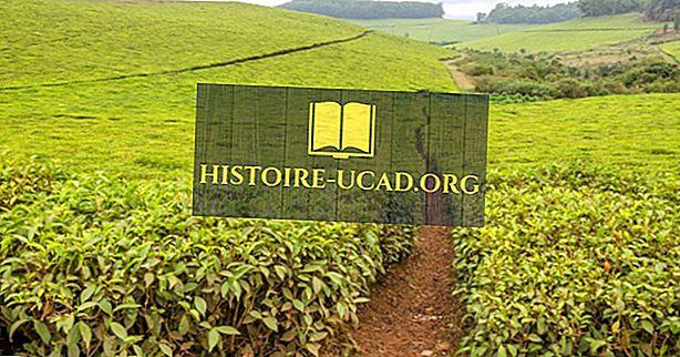 Kokie yra pagrindiniai Kamerūno gamtos ištekliai?