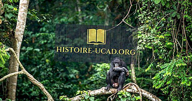 Каковы основные природные ресурсы Демократической Республики Конго?
