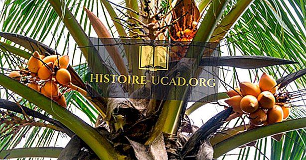 Kokie yra Saliamono Salų gamtos ištekliai?