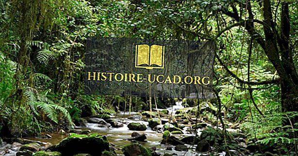 Jaké jsou hlavní přírodní zdroje Madagaskaru?
