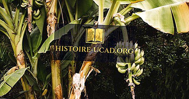 ما هي أكبر الصناعات في بوروندي؟