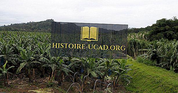 Hvad er de største industrier i Costa Rica?
