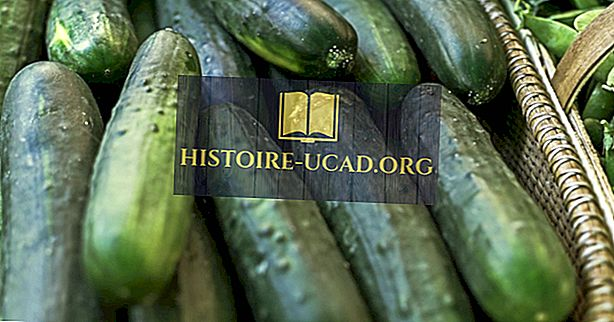 Les leaders mondiaux de la production de concombre
