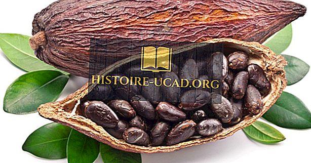 ekonomika - Top 10 kakao ražošanas valstis