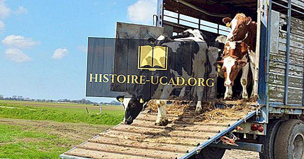 Los mejores 20 exportadores de ganado vivo