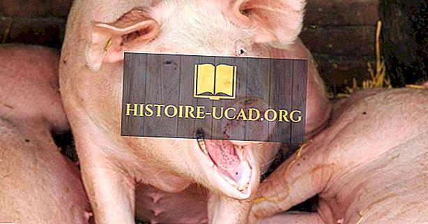اقتصاديات - أفضل 15 دولة من البلدان المصدرة للخنازير الحية