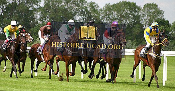 اقتصاديات - كبار الحصان والخيول المصدرين