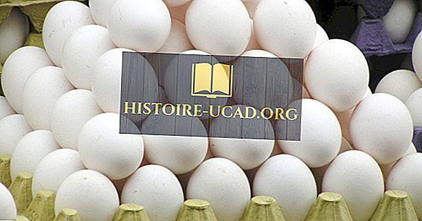 экономика - Топ 15 экспортеров яиц в скорлупе
