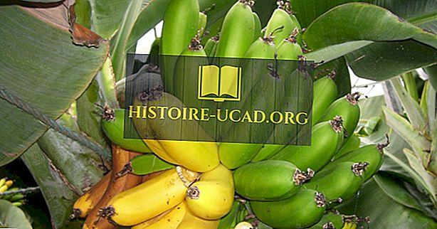 экономика - Лучшие страны-производители бананов в мире