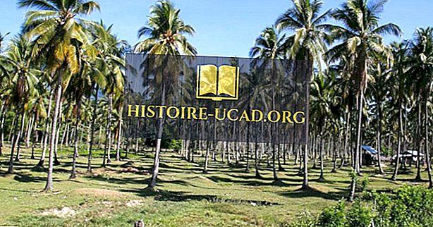 ekonomika - Světoví lídři v produkci kokosových ořechů