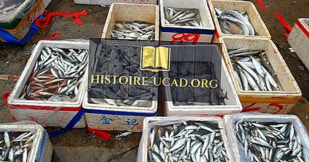 Vodilne države v ribolovnih in ribogojnicah