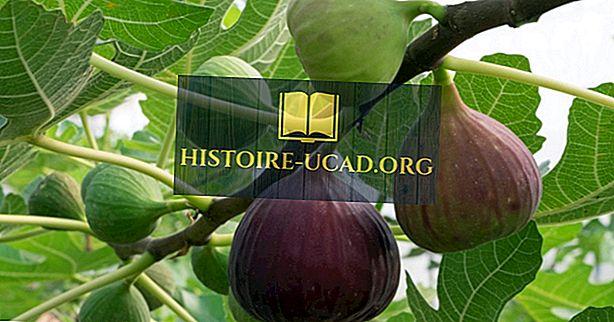 Où sont cultivées les figues?