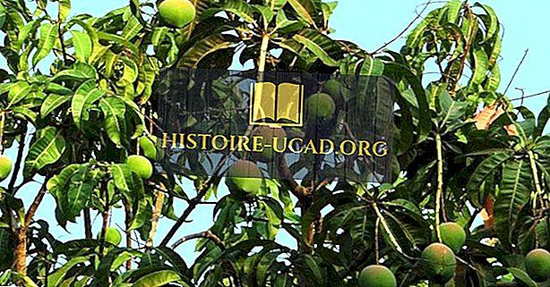 Top Mango produkující země na světě