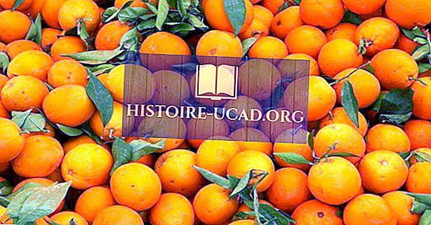 Principaux pays producteurs d'oranges du monde