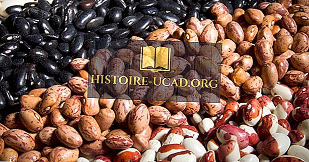 Les meilleurs pays producteurs de haricots secs au monde