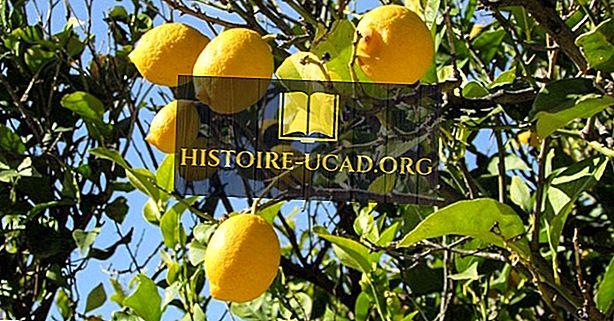 Die führenden Zitronenproduzenten der Welt
