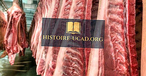 économie - Tout sur l'industrie du porc