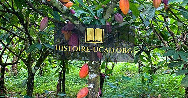ekonomika - Vše o kakaovém průmyslu