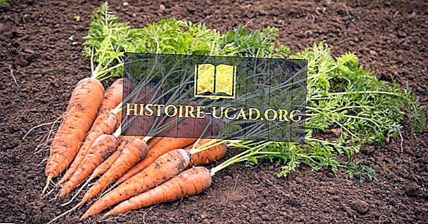Къде са отглеждани моркови и ряпа?