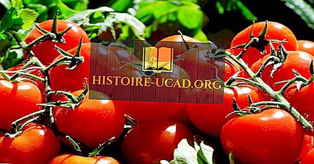 Pasaules vadošie tomātu ražotāji