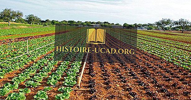 Weltweit führend in der Salatproduktion