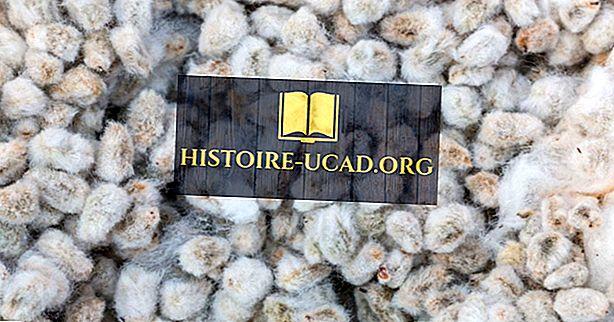 Země, které produkují nejvíce Cottonseed