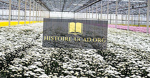 Globální vůdci v Cut Flower Exports