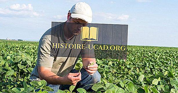 10 Negara Pengeluaran Kacang Kedelai Terbesar