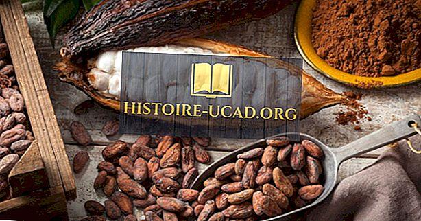 'S Werelds grootste exporteurs van cacaobonen