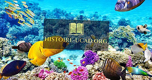 هل الحاجز المرجاني العظيم ميت بالفعل؟