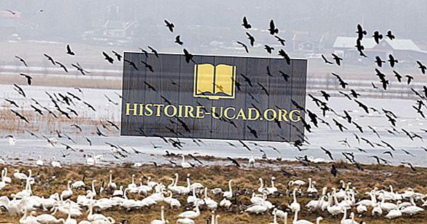 Što je Zakon o migracijskim pticama?