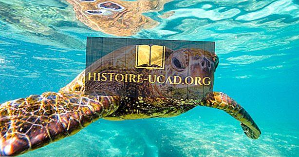 Что и когда Всемирный день черепах?