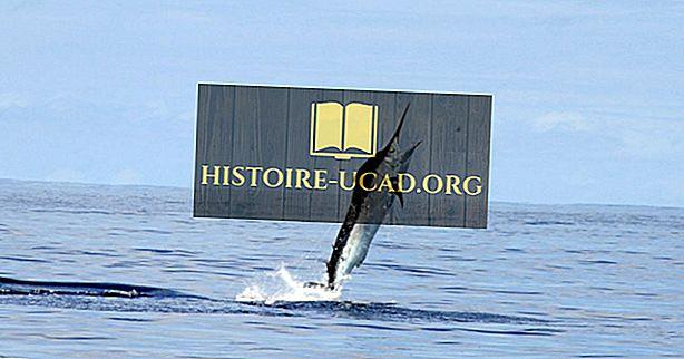 Nejrychlejší Ryby Na Světě