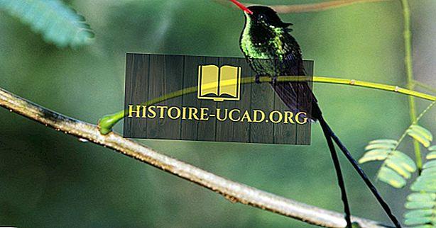 28 Spesies Burung Unik di Jamaika