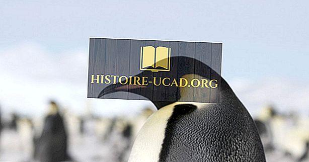 Huvitavad faktid surnud Colossus Penguinist