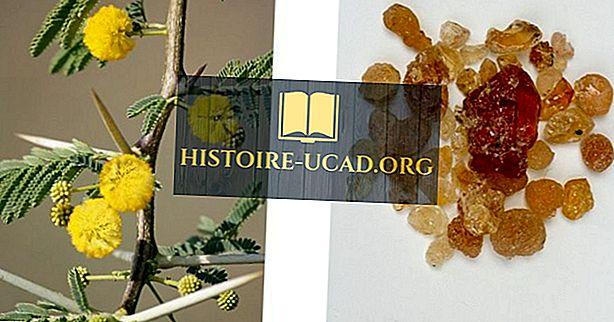 Kas yra gumos arabų (Acacia Gum)?