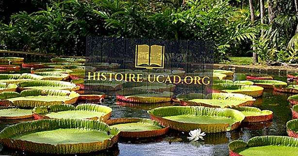 Amazing Facts About Victoria Amazonica