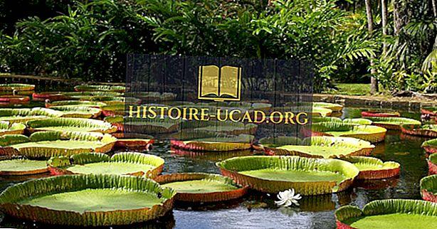 Hechos asombrosos sobre el Victoria Amazonica