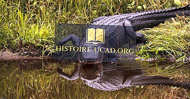Mitu tüüpi alligaatoreid elab maailmas tänapäeval?
