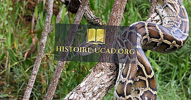Gatunki inwazyjne w Everglades na Florydzie