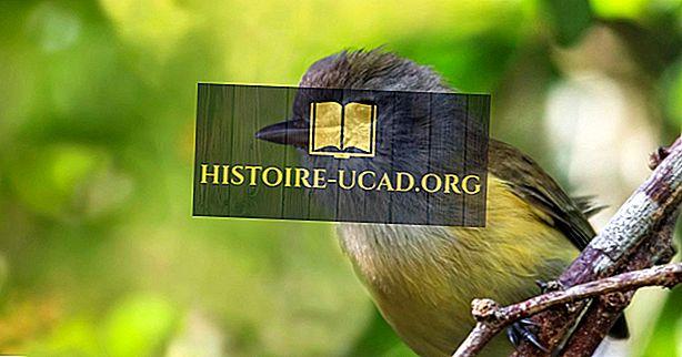 Puerto Rico-i endemikus madarak