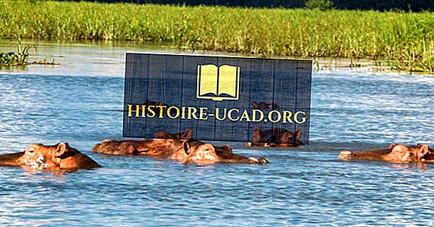 Où vivent les hippopotames?